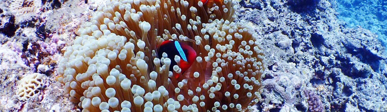 シュノーケリングで見れる海の生き物